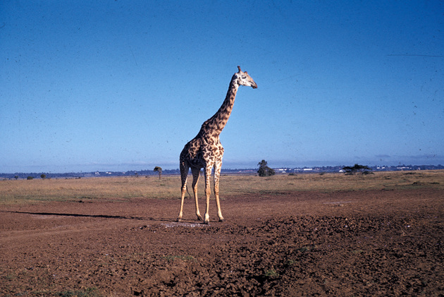 tanzania-1974-008.jpg