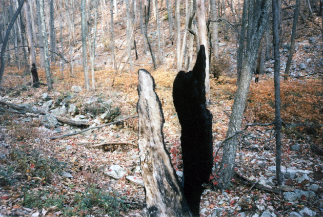 shenandoah-charred-stump.jpg